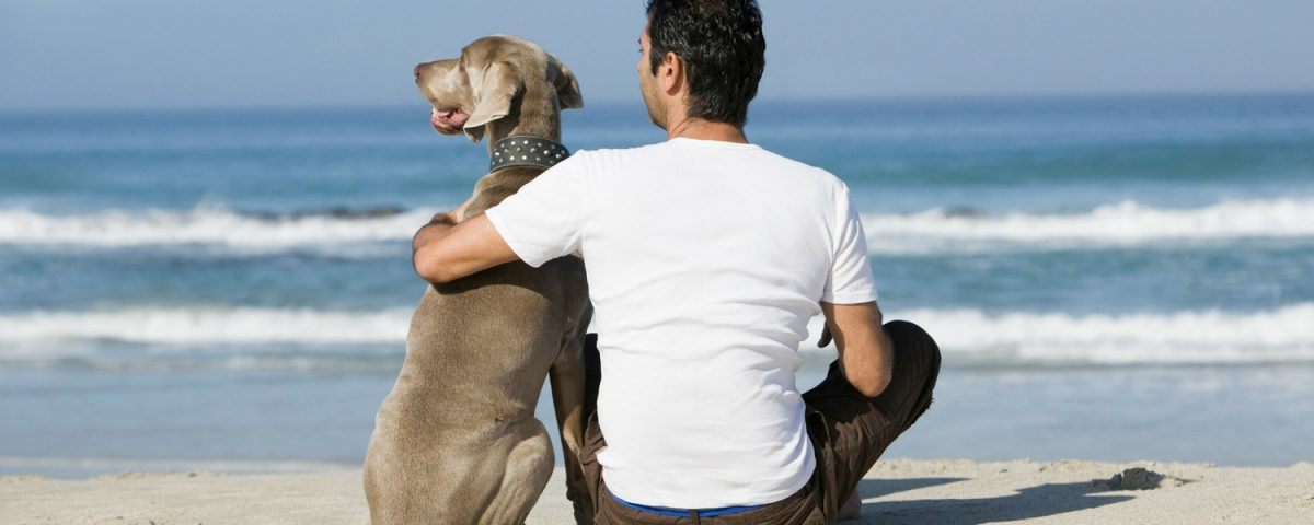 4 Options For Your Dog While On Vacation